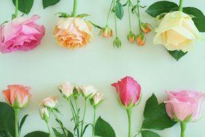 緑背景の並んだお花