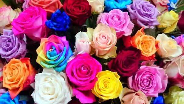 様々な色のバラ