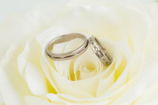 バラの花に添えられた夫婦の結婚指輪